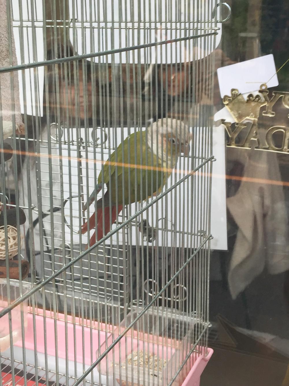 papagei-cafe-verrueckte-restaurants-tokyo