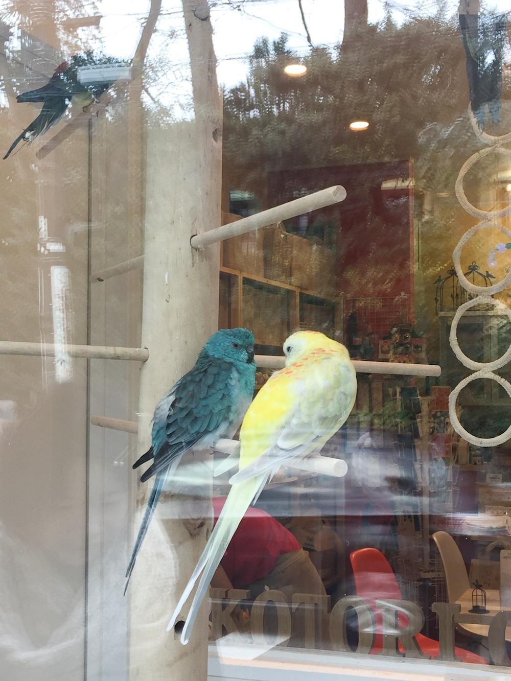 papagei-cafe-vogel-tokyo