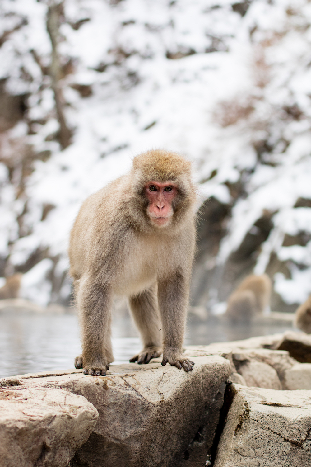 snow-monkey-park-jigokudani-nagano-travel-guide